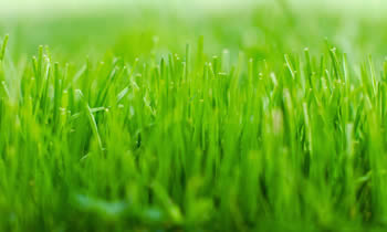Lawn Service in Louisville KY Lawn Care in Louisville KY Lawn Mowing in Louisville KY Lawn Professionals in Louisville KY