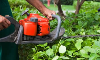 Shrub Removal in Louisville KY Shrub Removal Services in Louisville KY Shrub Care in Louisville KY Landscaping in Louisville KY