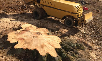 Stump Removal in Louisville KY Stump Removal Services in Louisville KY Stump Removal Professionals Louisville KY Tree Services in Louisville KY
