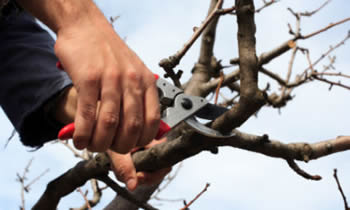 Tree Pruning in Louisville KY Tree Pruning Services in Louisville KY Quality Tree Pruning in Louisville KY