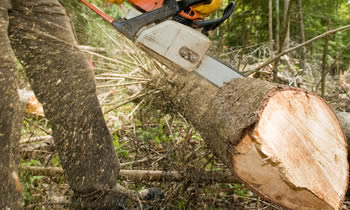 Tree Service in Louisville KY Tree Service Estimates in Louisville KY Tree Service Quotes in Louisville KY Tree Service Professionals in Louisville KY