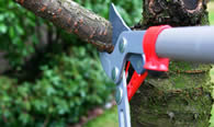 Tree Pruning Services in Louisville KY