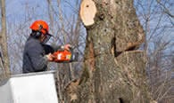 Tree Removal in Louisville KY